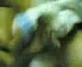Cewek abg putih lidi-lidian ngentot keenakan